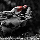 Goose by kutayk