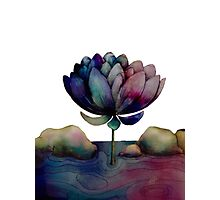 rainbow lotus flower Photographic Print