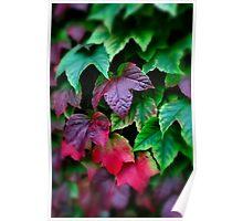 Autumn Colours... Poster