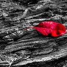 Red Leaf by Chris Ferrell