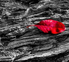 Red Leaf by Chris Ferrell