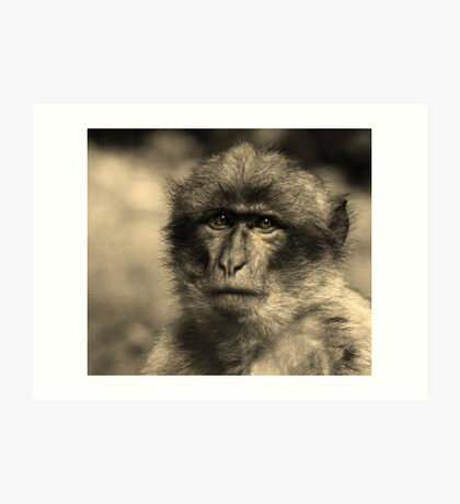 Primate Intensity Art Print