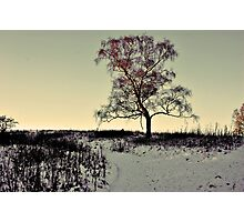 Lone Branches Photographic Print