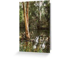 Eucalyptus at Kennington Resevoir By Lorraine McCarthy Greeting Card