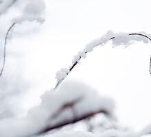 Snow Covered Branch by moonbloom