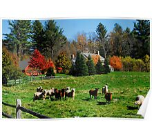 Sheep Farm in the Vermont Countryside Poster