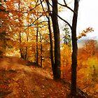 Autumn way by bogfl