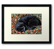 Guess who l found under the Hedgerows at Ferne Animal Sanctuary Framed Print