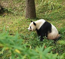 Mei Xiang by Cityside Photography