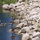 Geese # 1 by LifeCaptures
