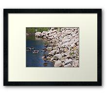 Geese # 1 Framed Print