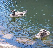 Geese # 5 by LifeCaptures