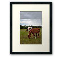 Horses # 1 Framed Print