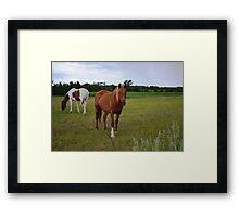 Horses # 2 Framed Print