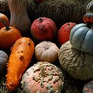 Pumpkin Selection by WildestArt