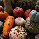 Pumpkin Selection by WildestArt