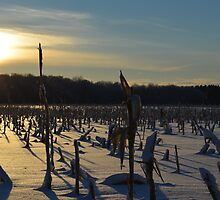 Minnesota in February # 6 by LifeCaptures