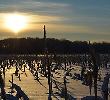 Minnesota in February # 7 by LifeCaptures