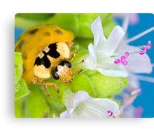 Ladybird - Ladybug - Marienkäfer - Glückskäfer III Canvas Print