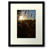 Golden Grass # 1 Framed Print