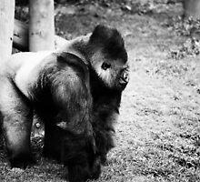 Gorilla King by Emily Rose