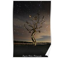 Startrail - Tree Of Life Poster