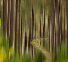 AUTUMN FOREST ABSTRACT VERSION 1 by Thomas Young