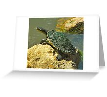 Turtle Bake Greeting Card