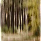 Abstract Forest by Thomas Young