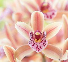 Orchid Chorus by Josie Eldred