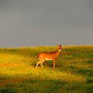The Buck at Dusk by TrendleEllwood