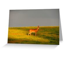 The Buck at Dusk Greeting Card