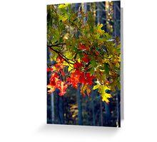 Oak Leaves in October Greeting Card