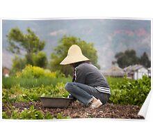 Asian Harvester Poster