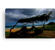 Beach Trees Canvas Print