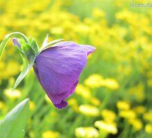The blue flower by Ikramul Fasih