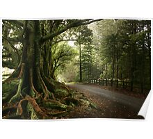 Tree lined avenue, Norfolk Island Poster