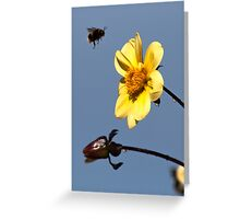 Bumble Bee In Flight Greeting Card