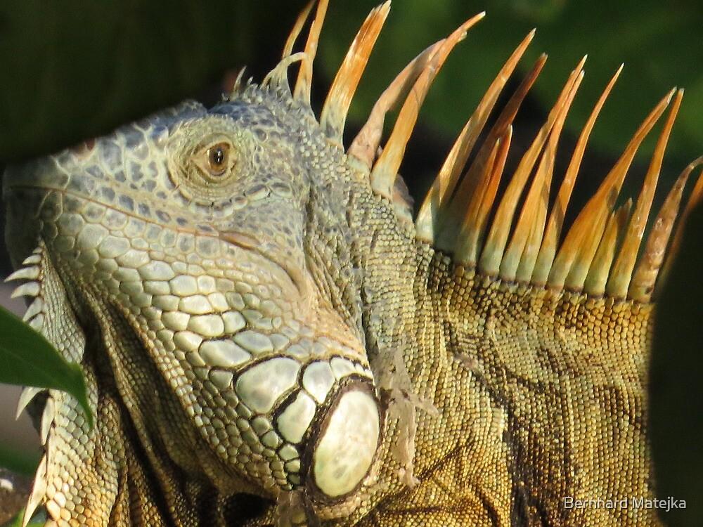 golden iguana - iguana de oro by Bernhard Matejka