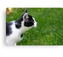Staring Black & White Cat Canvas Print