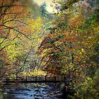 untitled autumn by Tgarlick
