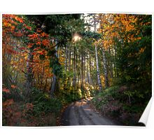 Shade and Sun ~ Fall Colors ~ Poster