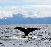 Sperm Whale Tail by Nicola Barnard