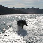Bottlenose Dolphin by Nicola Barnard