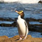 Yellow-eyed Penguin by Nicola Barnard
