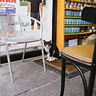 Store Cat by MatMartin