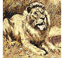 resting Lion Photographic Print