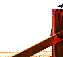 Crow at the Seaside Eight by Vincent J. Newman