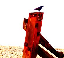 Crow at the Seaside Five by Vincent J Newman
