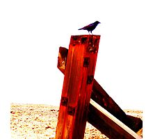 Crow at the Seaside Five Photographic Print